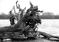 faces, drift, wood, tree, river, black, white,