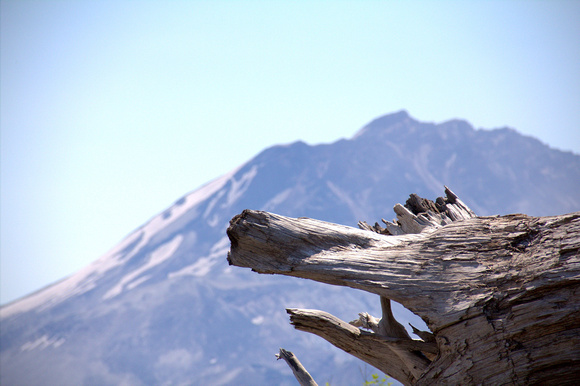 volcano, tree, mountain, mount saint helens, blues, sky, branch